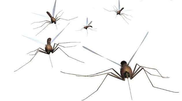 Keinot, joilla lievität hyttysenpuremista johtuvaa kutinaa