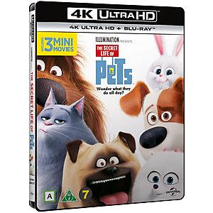 Kjæledyrenes hemmelige liv (4K UHD Blu-ray)