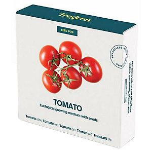 Tregren World Kitchen Seedpot—Tomato