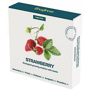 Tregren World Kitchen Seedpot—Strawberry