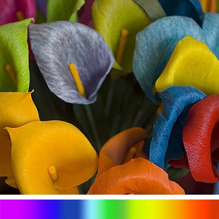 PurColor giver levende farver